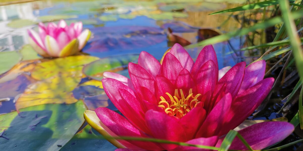 Kwiat w ishi dojo